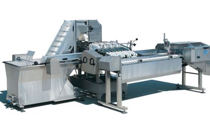 Sardine cleaning and gutting machine